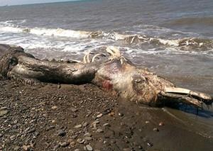 俄罗斯海滩惊现怪兽尸体