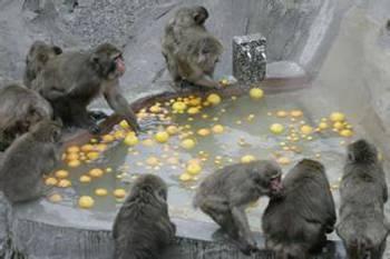 动物园猴子泡温泉