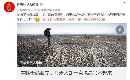 丹麦生蚝泛滥成灾 中国吃货:愿漂洋过海去救灾