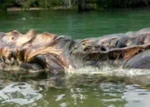 印尼現海灘神秘生物15米長遺骸巨型烏賊