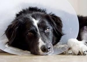 史上最奇葩的请假理由:请假陪病狗被扣薪